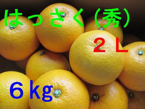 八朔(秀)2L 6kg