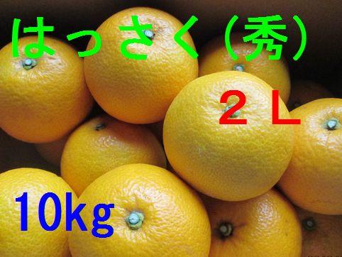 八朔(秀)2L 10kg