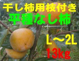 干し柿用「平種無し柿」お買い得品 13kg