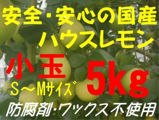 国産ハウスレモン(小玉)S〜M 5kg