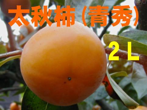 太秋柿(青秀) 2Lサイズ