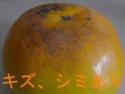 太秋柿(お買い得品)L〜3L混合