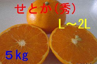 せとか(秀)L〜2L混合 5kg