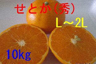 せとか(秀)L〜2L混合 10kg