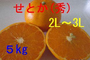 せとか(秀)2L〜3L混合 5kg