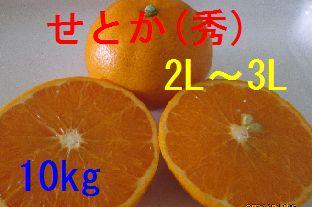 せとか(秀)2L〜3L混合 10kg