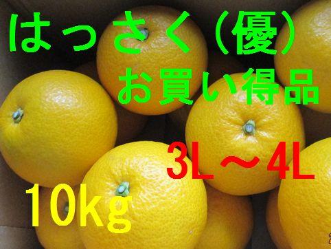 八朔(お買い得品)3L〜4L混合   10kg