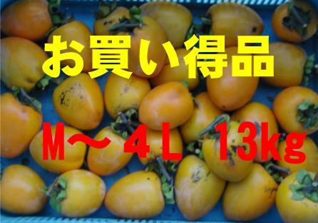 干し柿用枝付き(あたご柿)お買い得品  13kg