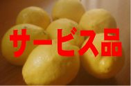 国産ハウスレモン(サービス品)M〜3L