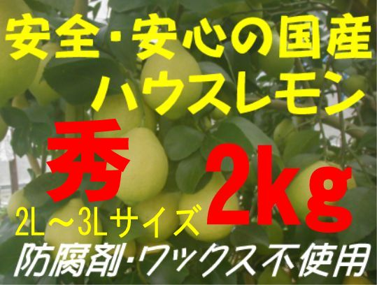 国産ハウスレモン(秀)2L〜3L 2kg